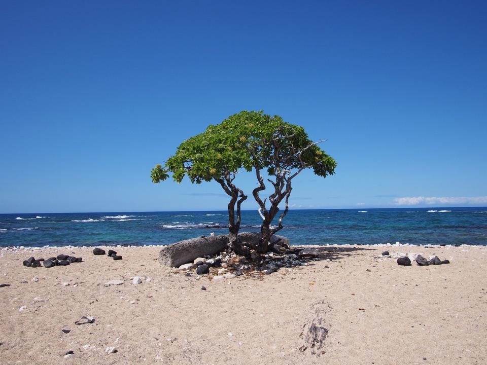 A tree on a beach